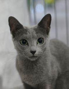 I lurv gray kitt-ehs!
