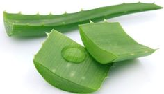 Remedies For Hair Aloe Vera for Acne and Acne Scars Treatment - Aloe Vera for acne and acne scras treatment. How to use aloe vera for acne treatment? how to use aloe vera for acne scars? How to treat acne with aloe vera? Natural Treatments, Eye Treatment, Skin Treatments, Aloe Vera Gel, Natural Home Remedies, Natural Hair Recipes, Hair Growth