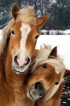 Pets Have Feelings Too shared Amazing Animals & Beautiful Nature's photo. Farm Animals, Animals And Pets, Funny Animals, Cute Animals, Funny Horses, Smiling Animals, Cute Horses, All The Pretty Horses, Beautiful Horses