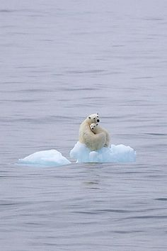 Global warming is real, and scientifically proven. Today turn off you lights from pm where ever you live, and help fight against global warming for Earth hour! Tonight bear and child Animals And Pets, Baby Animals, Cute Animals, Wild Animals, Baby Giraffes, Beautiful Creatures, Animals Beautiful, Mother Pictures, Sad Pictures