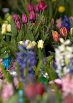 'Hoppy' Easter! PhillyBurbs.com highlights fun ideas on how to celebrate Easter in Bucks County this weekend.