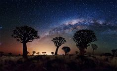 Milky way over quiver tree forest photo by Florian Breuer :)