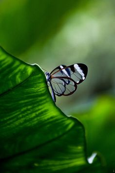 Bokeh Photography/butterfly