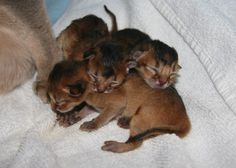 caring for newborn kittens   Cute Cats Pictures