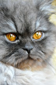 """A cat who has taken umbrage is a terrible sight to see."" --Rosemary Nisbet"