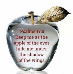 Psalm 17:8...Keep me as the apple of the eyes,hide me under the shadow of the wings.