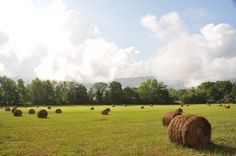 Let's go jump on a hay bale! Such a beautiful sight in the Smoky Mountains.