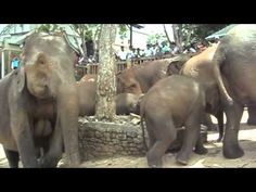 Sri Lanka - March of the Elephants