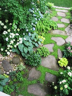 garden path with baby tears, hosta, heuchera, impatients, astilbe, ferns