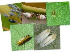Remedios caseros para las plagas en el jardin