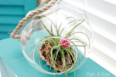 growing and caring for air plants tillandsias, container gardening, flowers, gardening, home decor