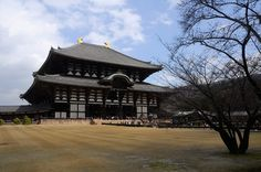 Nara #mountains #places #nature #earth #sightseeing #adventure #travel #tour #tours #photos #map #photographs #japan #Kyoto #imperialpalace #Kamakura #Nara #Kinkakuji #Shimogamojinja #NishiHonganji #Hiroshima #japantours #kyototours #Kotokuin