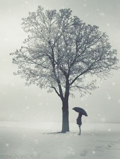 snowy.   This art captures the feeling of standing alone in the first wet snow... a time when everyone else has gone inside leaving you to reflect on the beauty of nature.