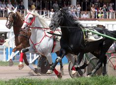Race Horses, Horse Racing, Standardbred Racing, Harness Racing, Majestic Horse, Trotter, Donkeys, Thoroughbred, Dark Horse