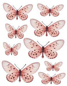 Swirlydoos Monthly Scrapbook Kit Club: Forums / Images  Graphics / Butterflies