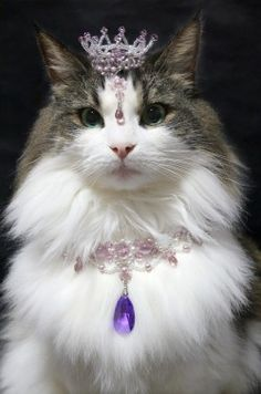 """""""You may call me Your Royal Highness frum now on, hoomin"""""""