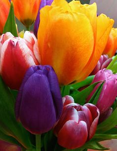 Tulips Smiling Photograph by Marie Hicks - Tulips Smiling Fine Art Prints and Posters for Sale