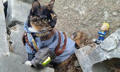 Cat Cosplay Specialist Tackles Fallout In Latest Creation - News - www.GameInformer.com