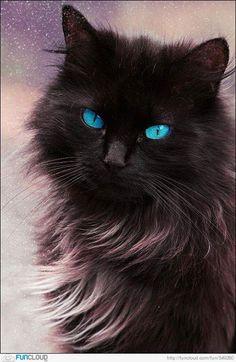 OMG blue eyed beauty
