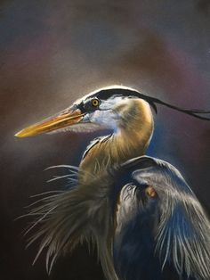 Pastel Drawing Great Blue Heron Bird Fine Art Print - 8 x 10