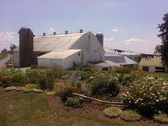 John & Barbie Esh farm - White Oak Road, Christiana, PA - Southern Lancaster County - July, 2011