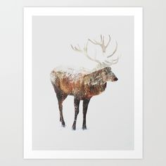 Buy Arctic Deer Art Print by Andreas Lie. Worldwide shipping available at Society6.com. Just one of millions of high quality products available.