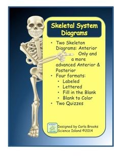 This product contains 2 skeletal diagrams in 4 different formats: labeled, lettered, fill-in-the-blanks, and blank for coloring.  So,there are 8 high quality drawings and 2 matching quizzes for your Biology or Anatomy and Physiology students.