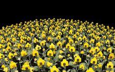 Por Raquel Arellano. Raquel: Sempre em busca de bonitezas e de boa comida. Imagine um jardim super colorido, com milhares de flores em diversos tons de amarelos, vermelhos, azuis e por aí vai. E se ao invés de flores fossem câmeras fotográficas? O artista plástico brasileiro André Feliciano imaginou essa cena e montou uma exposição …