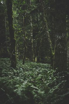 Forest by Deep|Love|Photography...