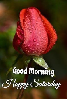 Good Morning Happy Saturday, Good Morning Roses, Good Morning Friends, Good Morning Greetings, Good Morning Beautiful Pictures, Good Morning Images, Days Of Week, Morning Quotes, Faith