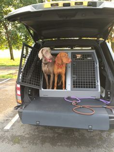 Transk9 B23 Audi A4 Avant Dog Crate Dog Transit Box Dog Cage Www Transk9 Com Audi Pinterest