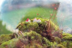 kokokoKIDS: Moss Terrarium.