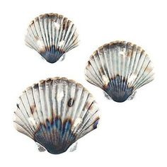 Set of 3 Metal Seashell Hanging Wall Art Beach Coastal Ocean Inspired Decor -- Check this awesome product by going to the link at the image. (This is an affiliate link and I receive a commission for the sales) Home Decor Sets, Home Decor Wall Art, Wall Art Sets, Hanging Wall Art, Starfish Wall Decor, Distressed Wood Wall, Abstract Metal Wall Art, Beach Wall Art, Unique Wall Art
