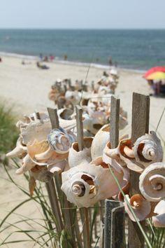 shell kabobs... lol -- Dionis Beach, Nantucket.