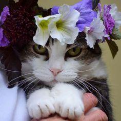 Imagem de flowers, adorable, and cat