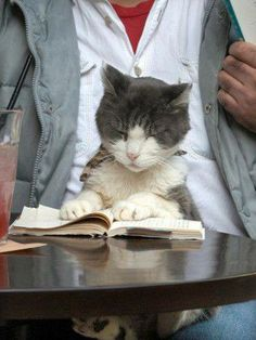 Kitty cat reading at a Tokyo Cafe I Love Cats, Crazy Cats, Cute Cats, Funny Cats, Funny Animals, Cute Animals, Foto One, Chat Web, The Book Of Eli