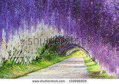 Стоковые фотографии и изображения большие сиреневые цветы | Shutterstock