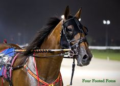 Reference Images, Art Reference, Harness Racing, Trotter, Horse Racing, Horses, Animals, Animales, Animaux