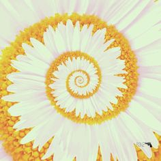 gif art trippy hippie psychedelic flower nature sunflower Spiral animated gif gif pscicodelia