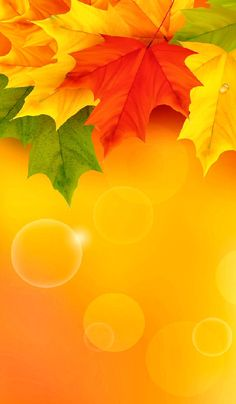 🍂🍁🌻🍁🍂 Thanksgiving Iphone Wallpaper, Iphone Wallpaper Fall, Framed Wallpaper, Cellphone Wallpaper, Aesthetic Iphone Wallpaper, 3d Wallpaper Flower, Beautiful Flowers Wallpapers, Flower Backgrounds, Wallpaper Backgrounds