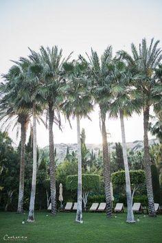 Columbia Beach Ressort – welcome to paradise, cyprus, columbia Beach Resort Columbia, Cyprus, Beach Resorts, Travel Around, Dolores Park, Island, Plants, Paradise, Viajes