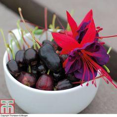Fuchsia edible FUCHSIABERRY | Thompson & Morgan