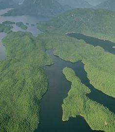 Great Bear Rainforest ariel view