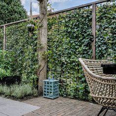 Privacy Hedge, Climbing Wall, Floral Photography, Hedges, Outdoor Furniture, Outdoor Decor, Spring Flowers, Beautiful Gardens, Garden Design
