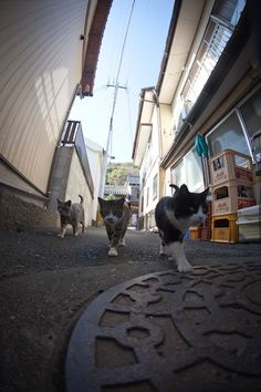 "<b>Photographer <a href=""http://d.hatena.ne.jp/fubirai/"" target=""_blank"">Fubirai</a> has spent the last five years documenting the lives of the semi-wild cats that roam the island in Fukuoka, Japan.</b> The cats are fed by local fishermen and wander freely through the streets, boatyards, porches, and houses of the city. <i>Heaven.</i>"