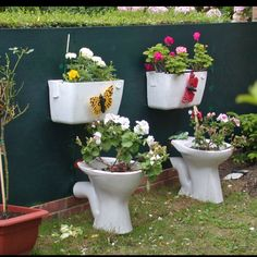 Recycled toilet garden:) is this happening? you bet your asses!