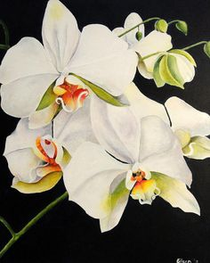 Moth Orchids Painting  - Moth Orchids Fine Art Print