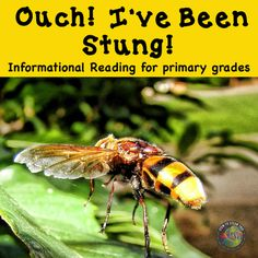Yellow Jacket Informational Reading for Elementary School Primary Science, Mad Science, Stem Science, Science Classroom, Science Lessons, Classroom Ideas, Science Ideas, Teaching First Grade, Teaching Kindergarten