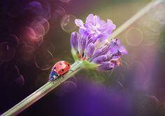 ladybug by Pier Luigi Saddi on 500px