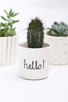 A cactus is a superb means to bring in a all-natural element to your house and workplace. The flowers of several succulents and cactus are clearly, their crowning glory. Cactus can be cute decor ideas for your room. Mini Cactus Plants, Small Potted Plants, Indoor Plant Pots, Cactus Flower, Flower Pots, Cactus Cactus, Indoor Cactus, Small Cactus, Hanging Plants